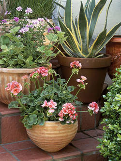 round-container-potted