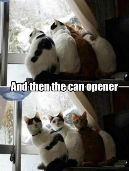cats-hear-a-can-opener